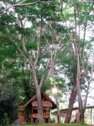 AhPoong31