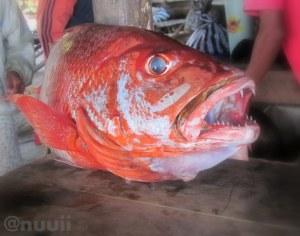 Kakap Merah